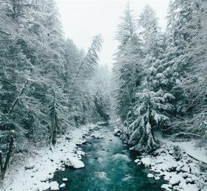 Обсъждат проект за развитие на горските територии в област Монтана