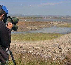 Над 7500 птици зимуват по брега на Дунав и водоемите във Видин и Монтана