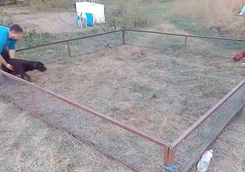 BBC: България на първо място в незаконните боеве с кучета
