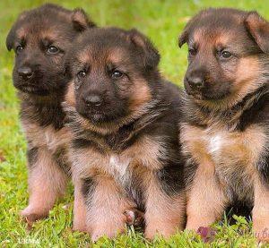 Семейство от Перник учреди фондация за бездомни кучета