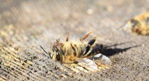 Проф. Евгения Иванова: Масовото измиране на пчели е вследствие на директно отравяне с пестициди