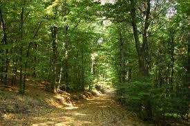 Държавата подновява изкупуването на частни гори