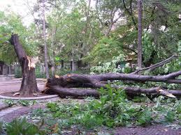 След бурята във Видинско екипи на РСПБЗН-Видин оказали техническа помощ