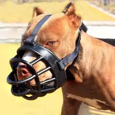 Глоби от 100лв. до 1000лв. за разходка на едро куче без повод и намордник