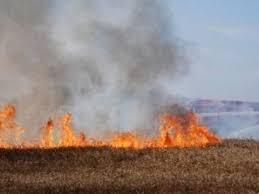 Пожар предизвикан от деца, унищожи житни ниви край Монтанско