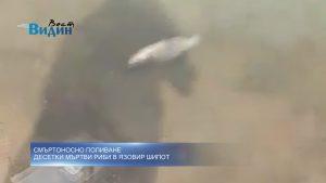 Поредна порция абсурд в Северозапада: Килограми мъртва риба заради източване на язовир Шипот (видео)