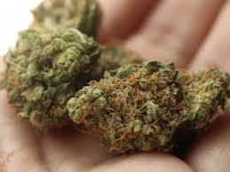 Хванаха непълнолетен видинчанин с марихуана