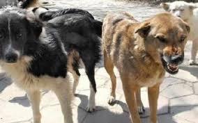 Пореден инцидент – бездомно куче нахапа дете в Хасково