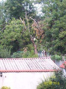 По ваш сигнал: Опасни клони над двора на училище във Видин (ОБНОВЕНА)