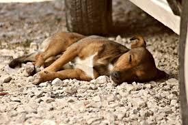 Разследват смъртта на куче в Буковец