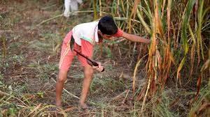 Инспекцията по труда ще следи за непълнолетни на полето