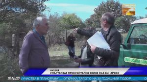 Акция във Винарово: Умъртвяват още прасета заради неизпълнени разпоредби (Новините на Видин Вест)