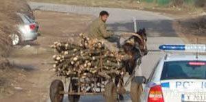 Иззеха незаконна дървесина във Видинско