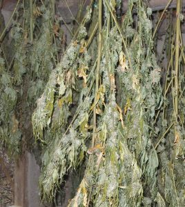 Около 7 килограма наркотично вещество е открито в жилищен блок в Поморие