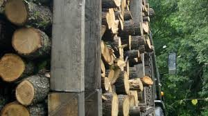 Спипаха незаконна сеч от горския фонд във видинско