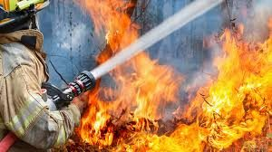 10 декара орехови насаждения изхоряха при пожар край Видин