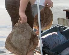 С 32 % е увеличена квотата на България и Румъния за улов на калкан в Черно море