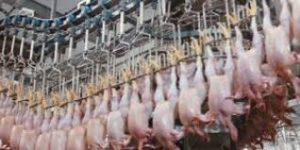 100 тона полско пилешко със салмонела е стигнало до българския пазар