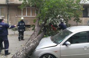 Видински огнеборци отстраниха дърво паднало върху лек автомобил