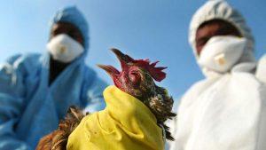 БАБХ констатира ново огнище на Нюкясълска болест по птиците във Видинско село