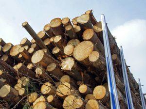 Хванаха 30-годишен да превозва незаконни дърва във Видинско