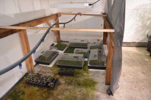 Разбиха модерна наркооранжерия в монтанското село (Снимки)