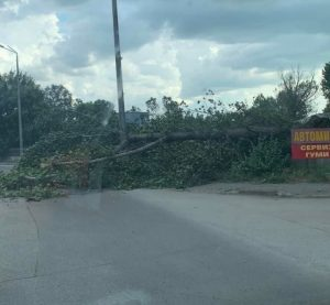 Силната буря във Видин събори дървета и изпочупи клони
