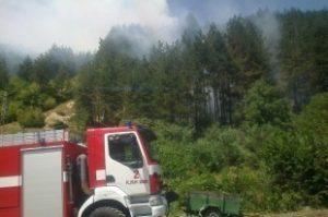 Бум на пожарите в област Видин. Унищожени са два декара иглолистна гора и 10 декара царевица край Връв
